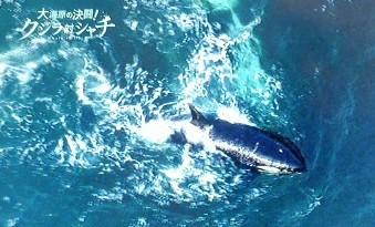 葬儀葬祭経営コンサルタント中西正人(クジラ対シャチ)