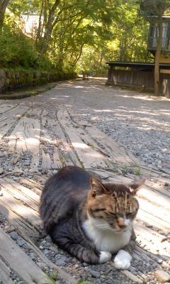 葬儀葬祭業経営コンサルタント中西正人(猫と温泉地)