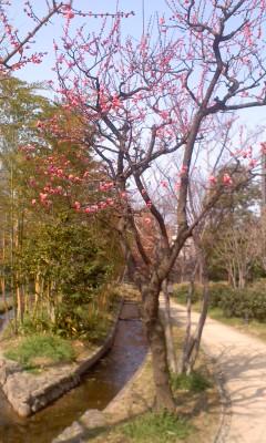 葬儀葬祭経営コンサルタント中西正人(春のイベント晴天を祈る)